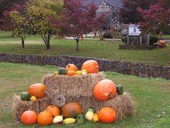 Fall Festival 005